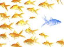 Lời khuyên cho doanh nghiệp khi không có sự khác biệt với đối thủ